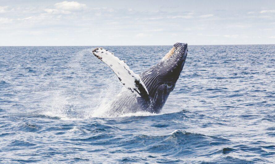Die laufenden Wale